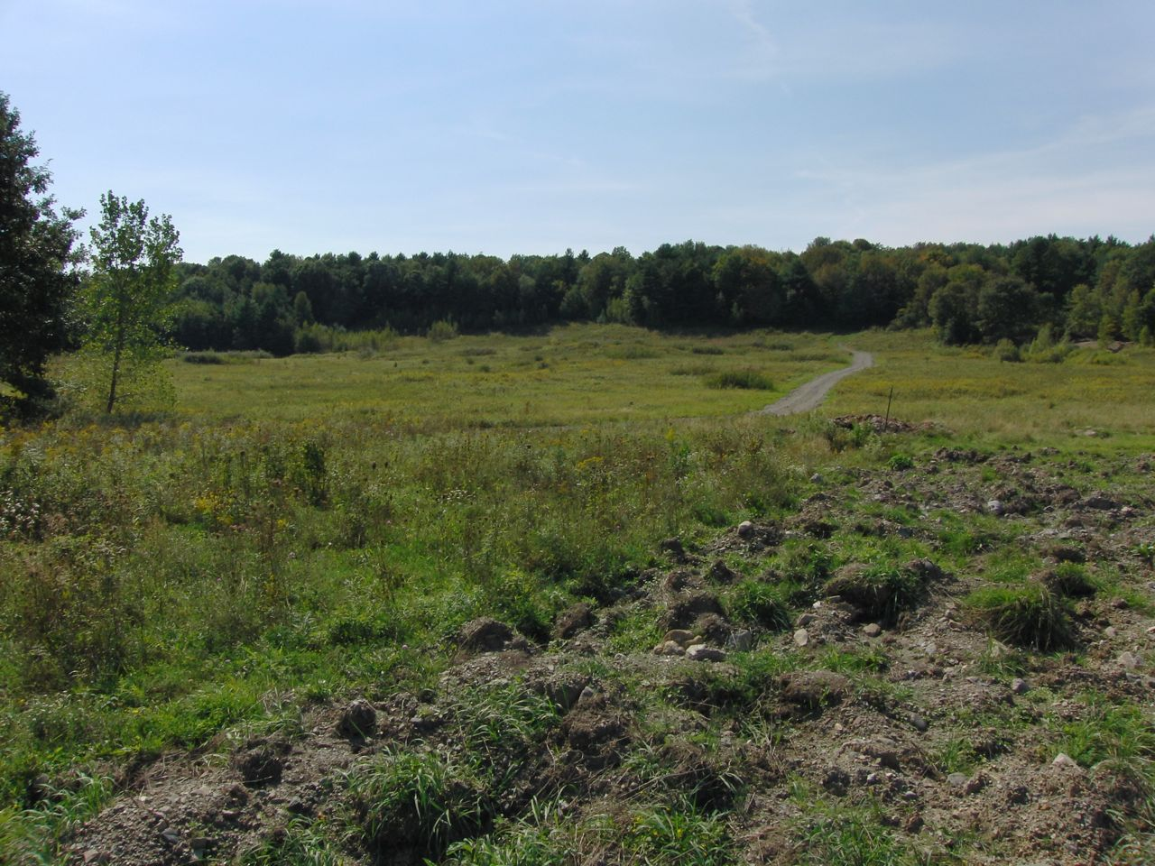Looking into the 40 acre clearing